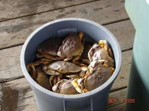 crab bucket1 300x225 Are you surrounded by crabs?